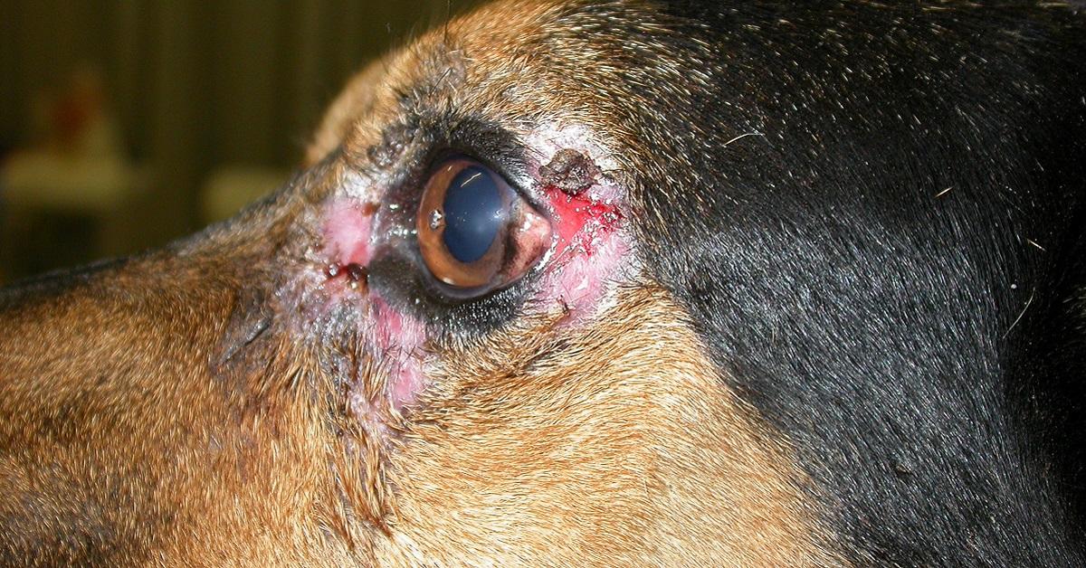 cane con occhio lacerato