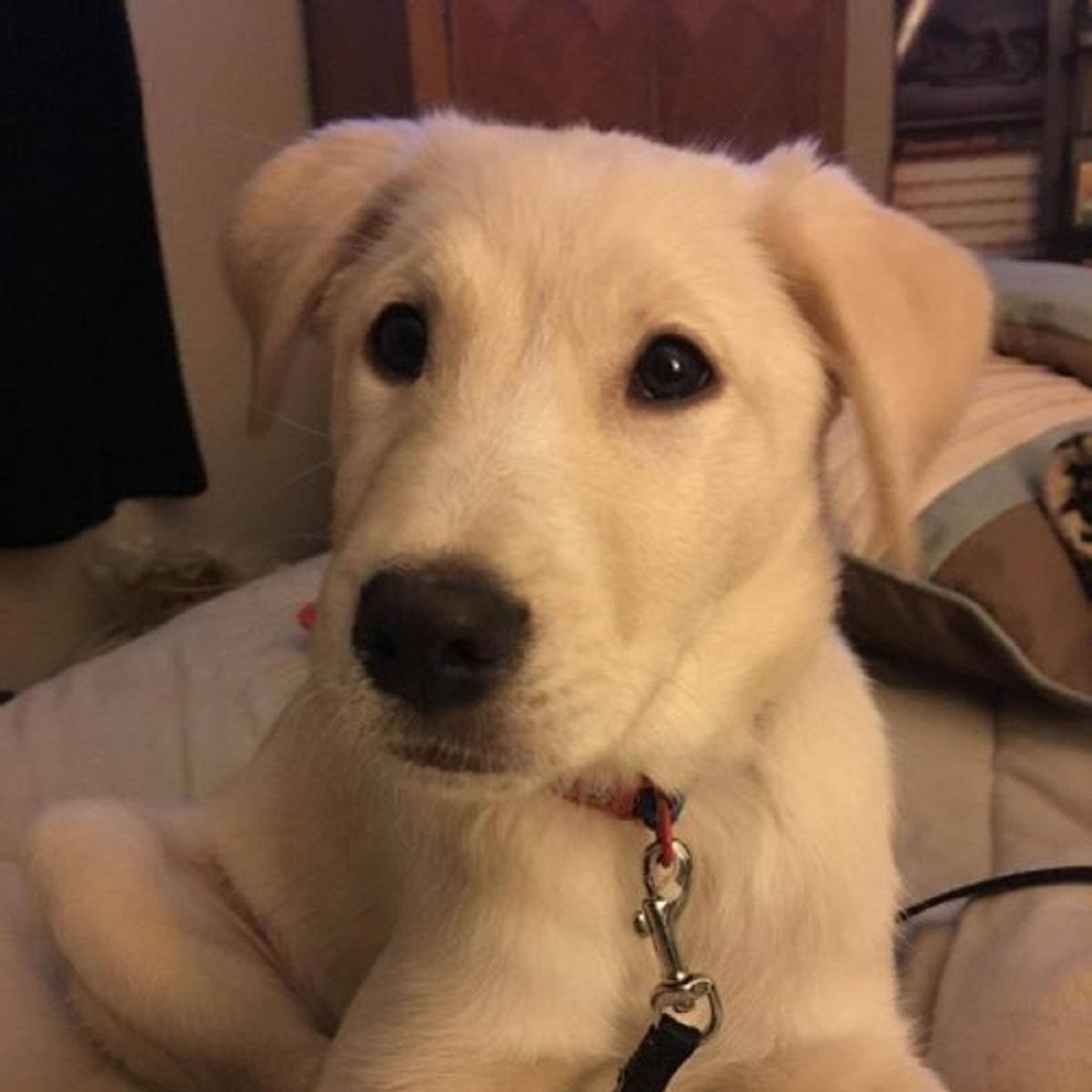 Harley, il cucciolo trovato davanti il dipartimento di polizia (FOTO)