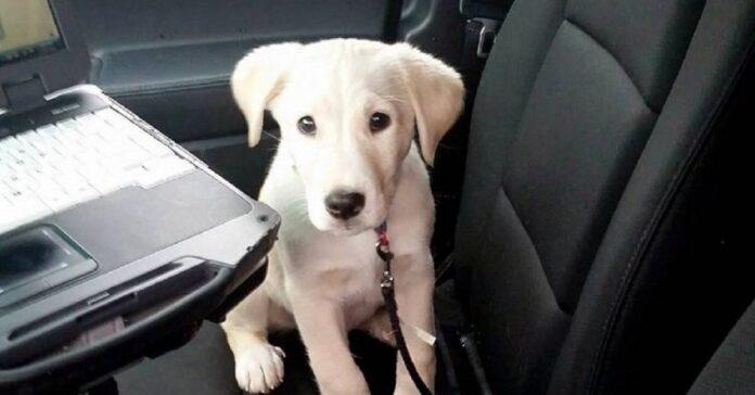harley cucciolo trovato davanti dipartimento polizia