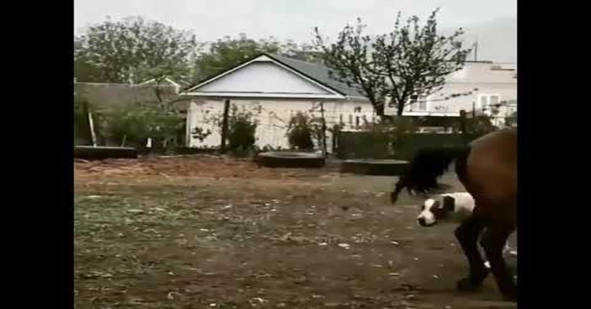 La meravigliosa amicizia fra un cane e un cavallo (VIDEO)