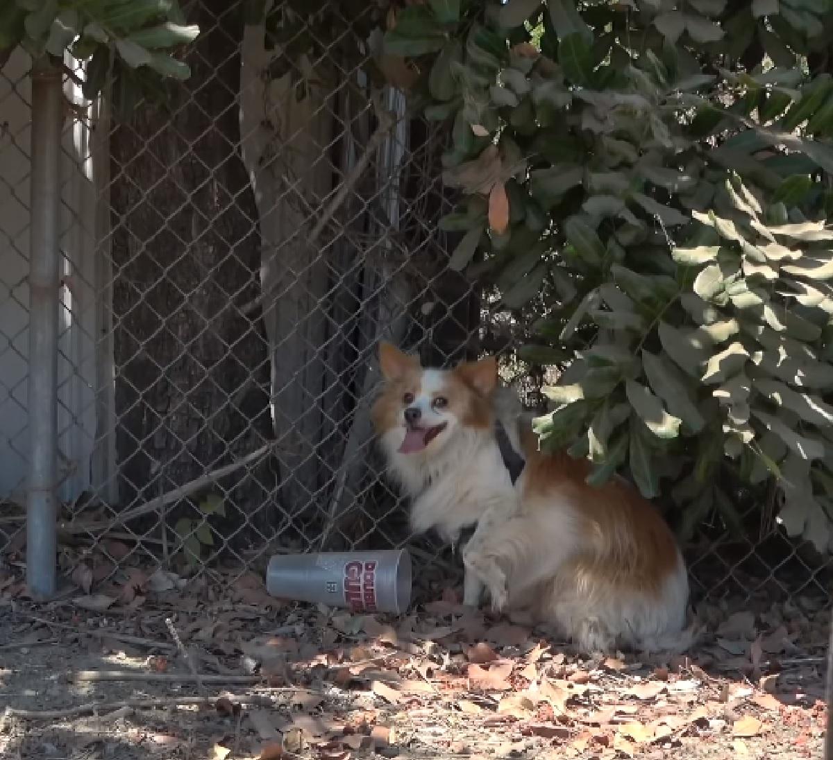 Il cucciolo di cane viene abbandonato nel parco, i soccorritori registrano il video del suo difficile salvataggio