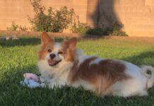 cucciolo di cane viene abbandonato nel parco dai soccorritori registrano il video