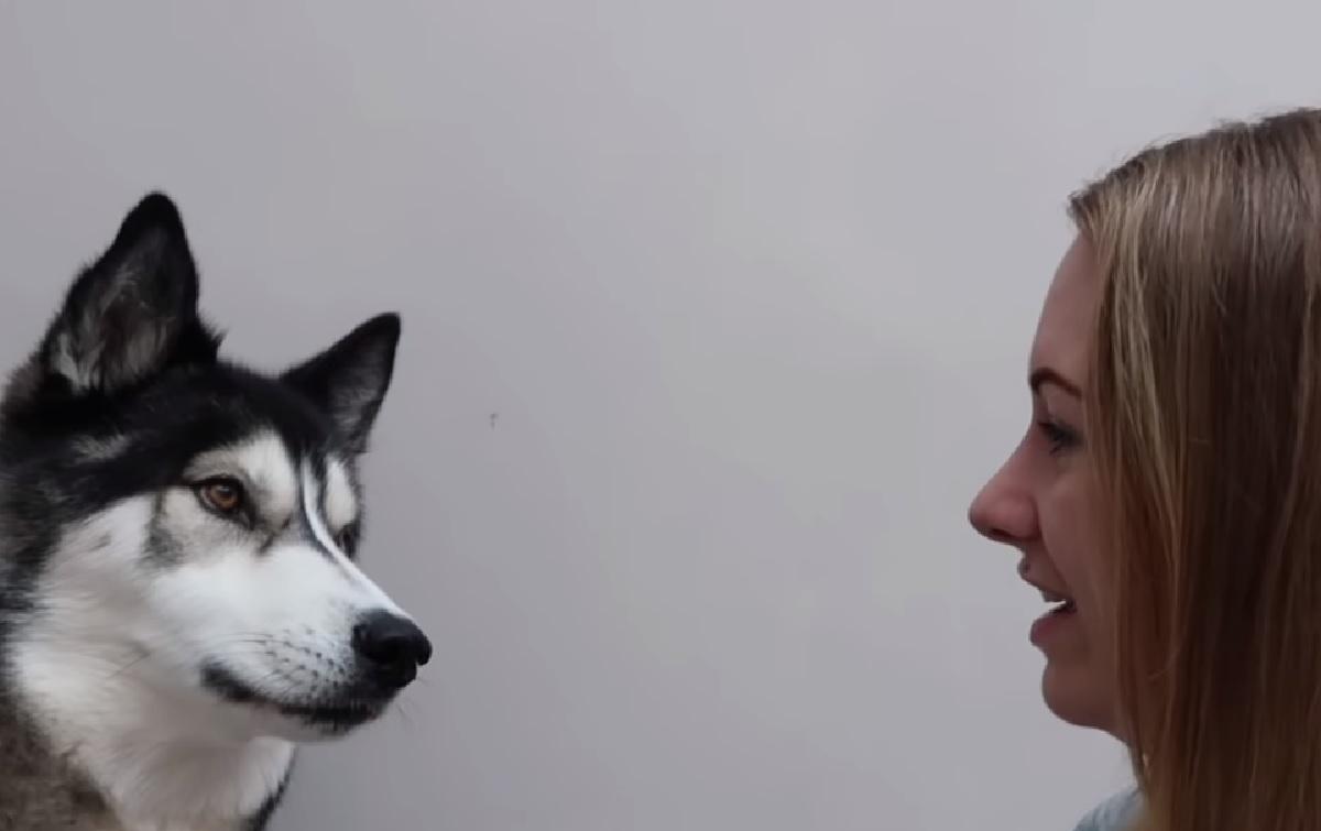 Il cucciolo di Husky ha imparato a parlare, nel video ci mostra le sue sconcertanti abilità
