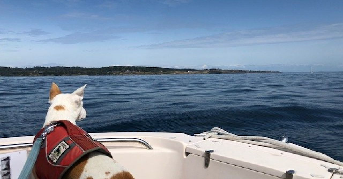 Eba, il cucciolo di cane meticcio adottato che ora salva le balene (VIDEO)