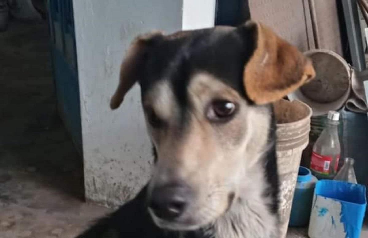 Kayfaz, il cagnolino smarrito che il suo anziano proprietario sta cercando (FOTO)
