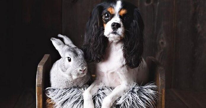 lola cucciola cavie insegna coniglio come cane