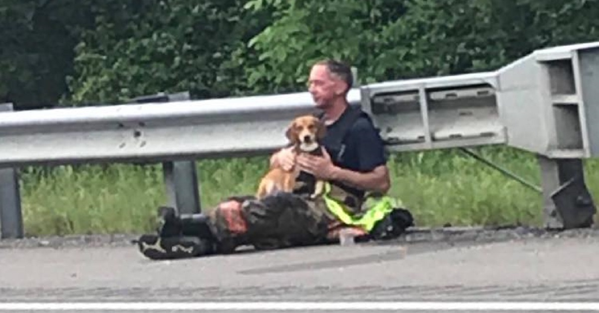 Lucky, il cucciolo di cane coraggioso che è rimasto accanto al suo padrone dopo un incidente (VIDEO)