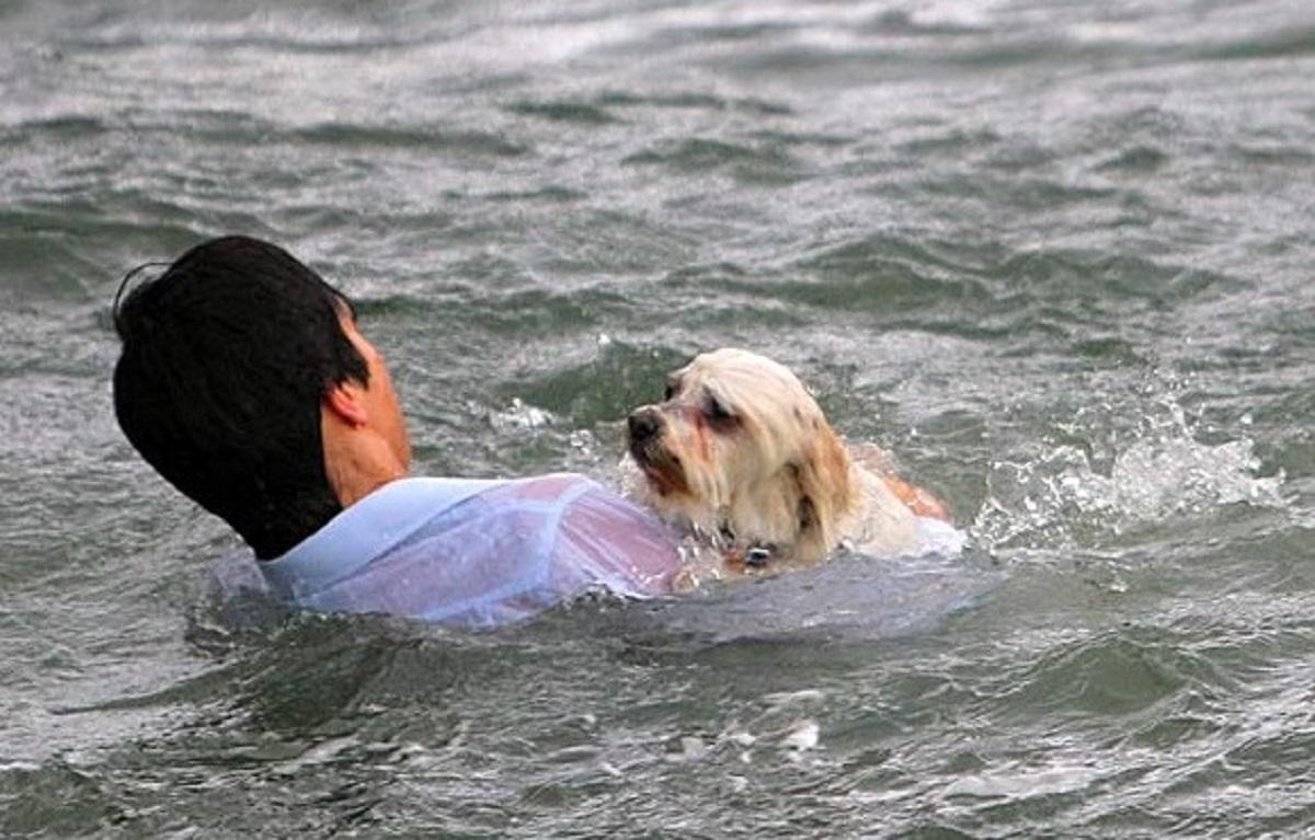 Matías, il cucciolo di cane coraggioso che si improvvisa bagnino (VIDEO)