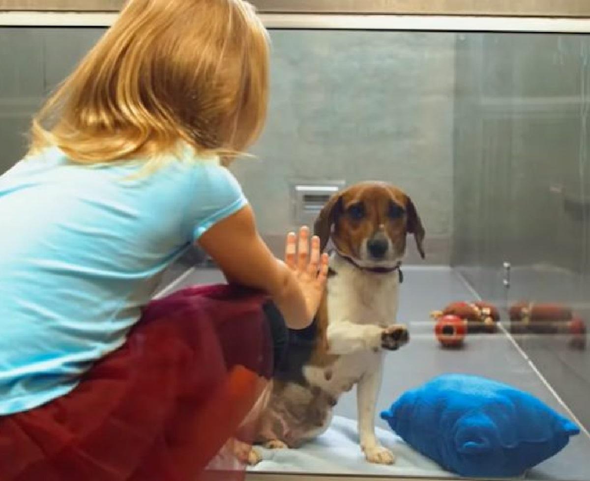 suzie cucciola beagle gesto speciale