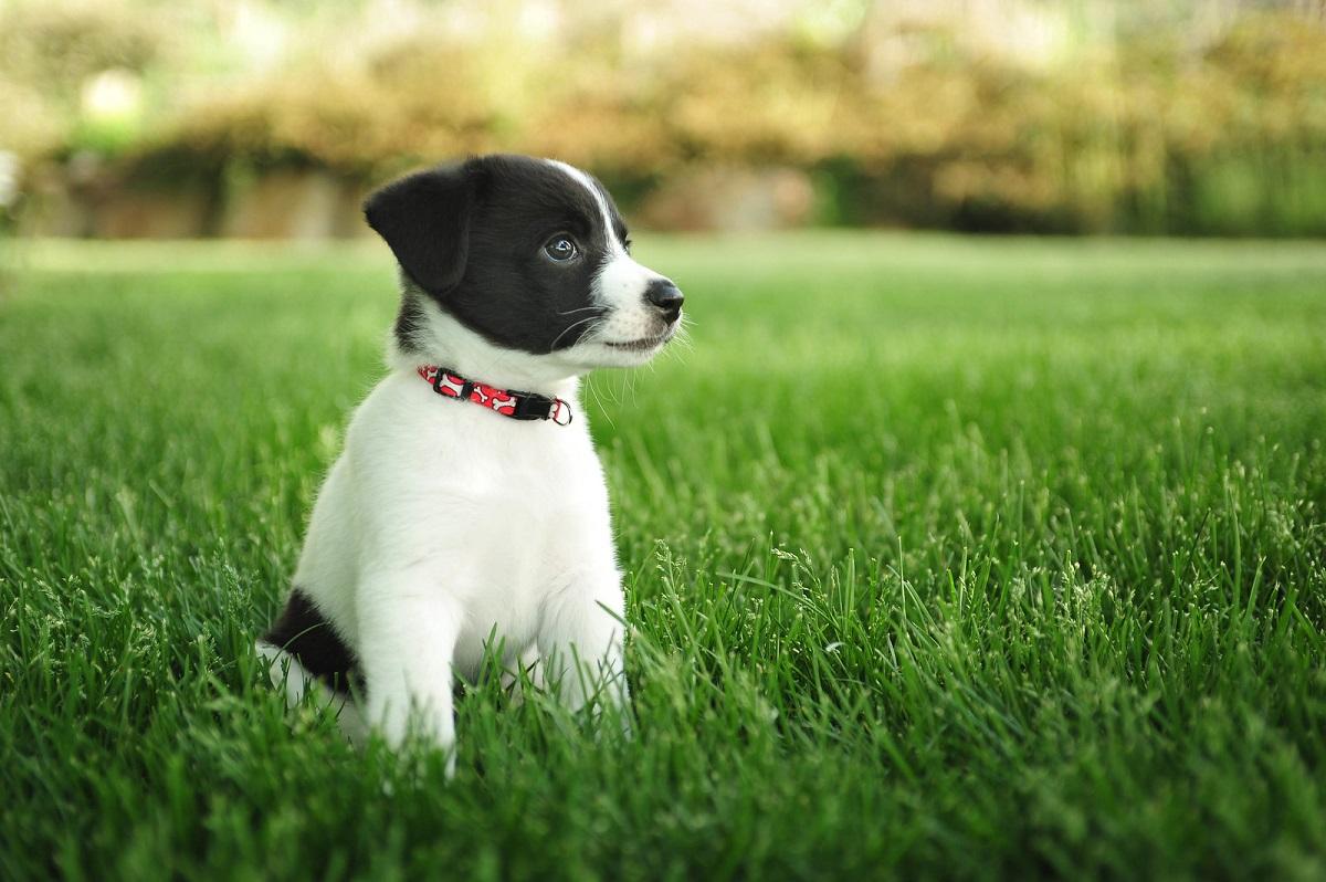 Omogeneizzati per cuccioli di cane: quali dargli, quando e come farglieli mangiare