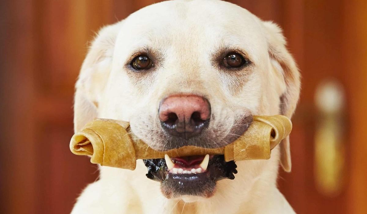 Ossa di pelle per cani, sono uno snack sano o bisogna limitarne l'assunzione?