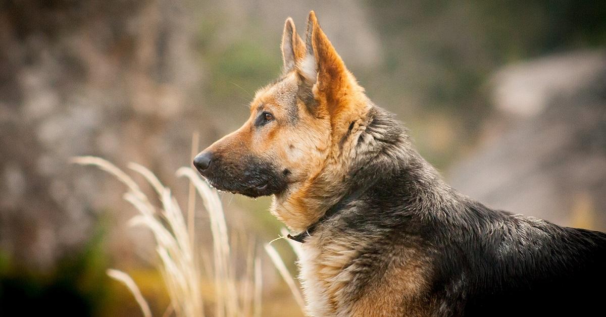 cane tra le sterpaglie