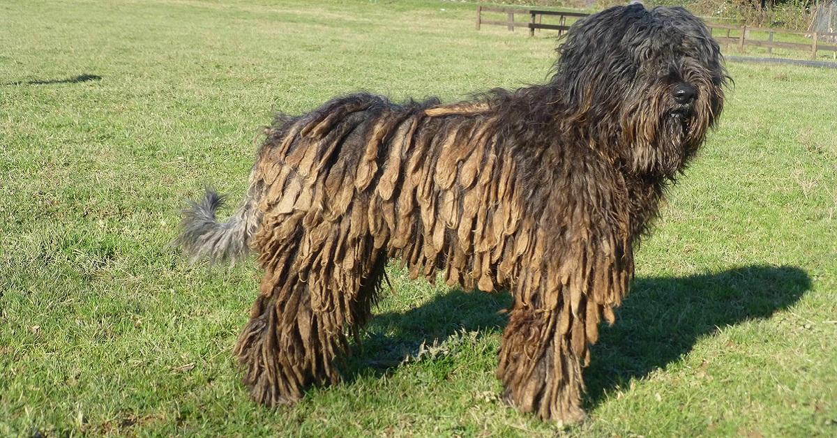 pelo del cane con nodi