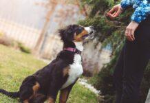 dare snack al cane