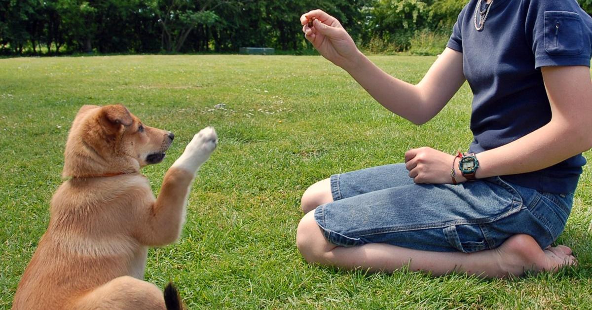 addestrare un cucciolo
