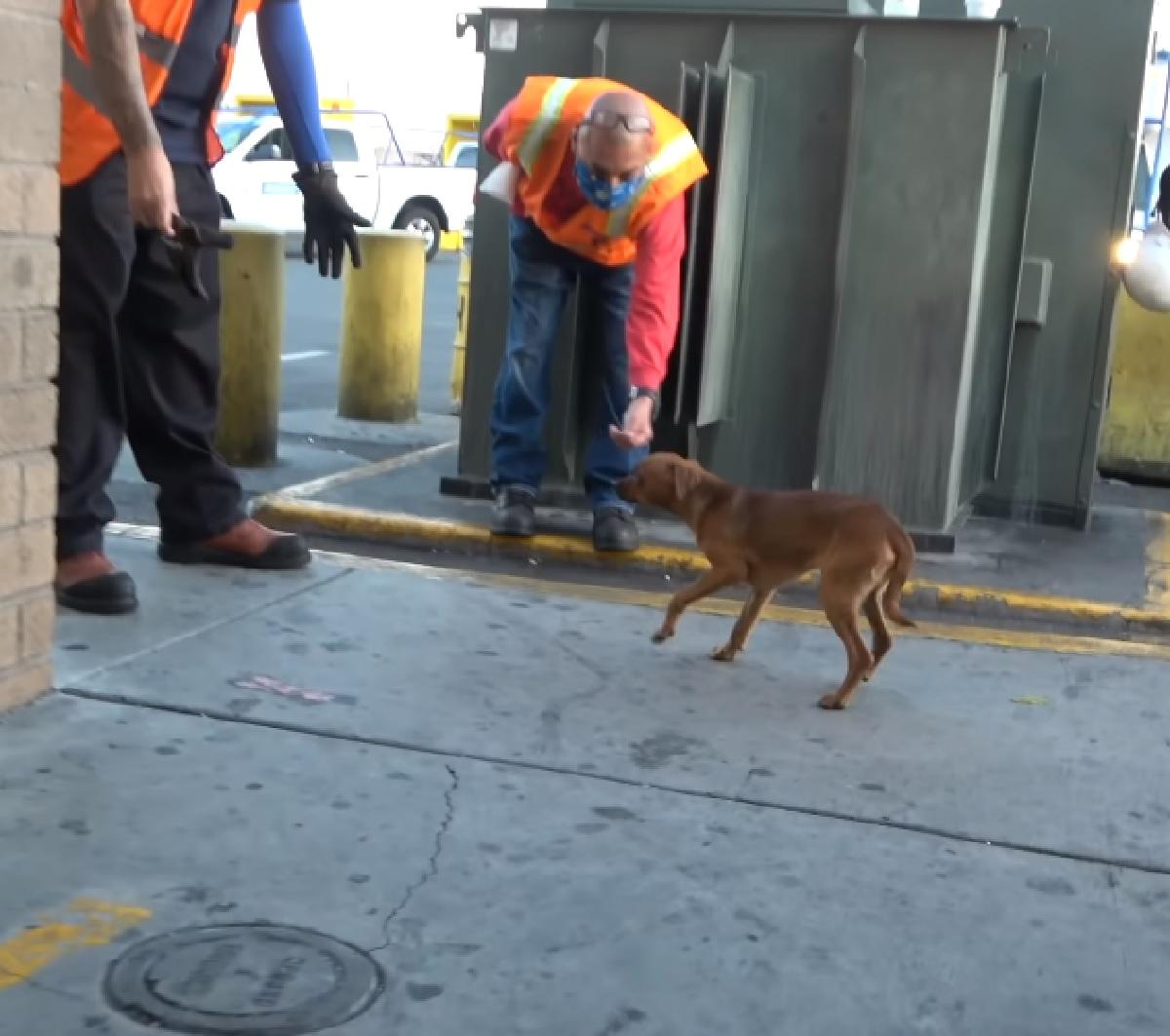 Questo cucciolo di cane viveva in un cantiere, un uomo ha registrato in video il suo difficile salvataggio