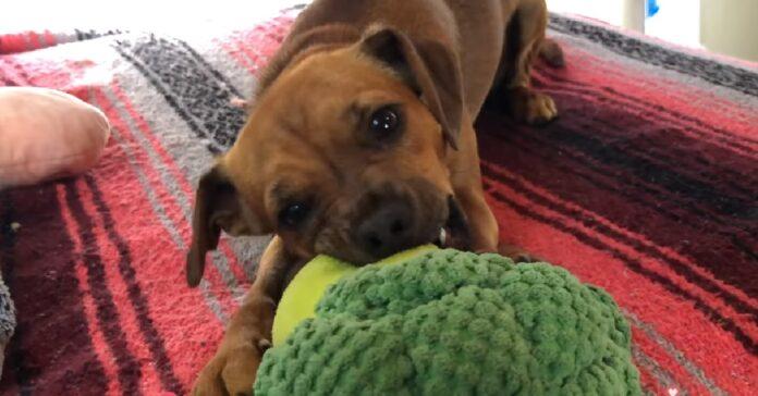 il cucciolo di cane viveva in un cantiere uomo registra il salvataggio