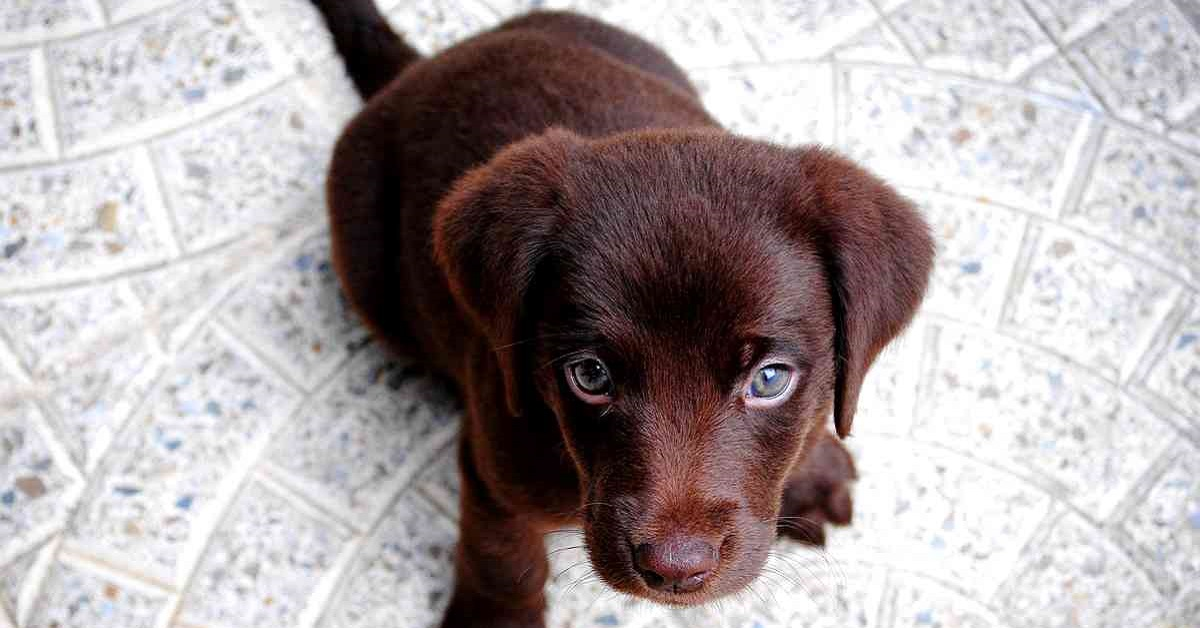 Cagnolino poco affettuoso, è la sua indole oppure c'è qualcosa che non va?
