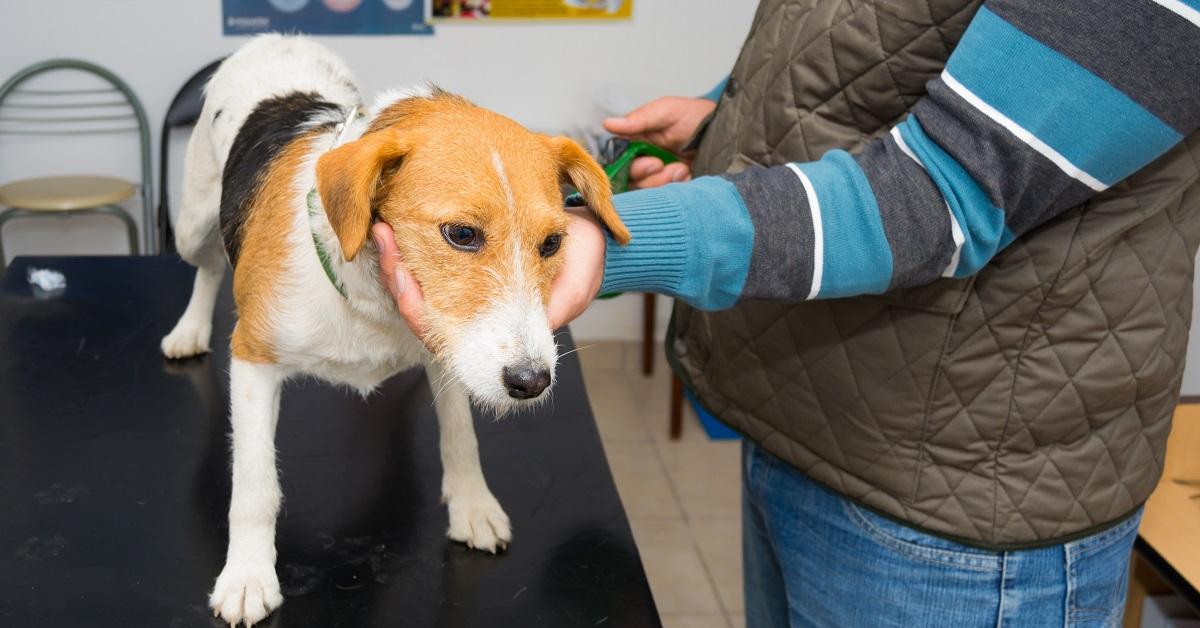 cane dal veterinario per controllo