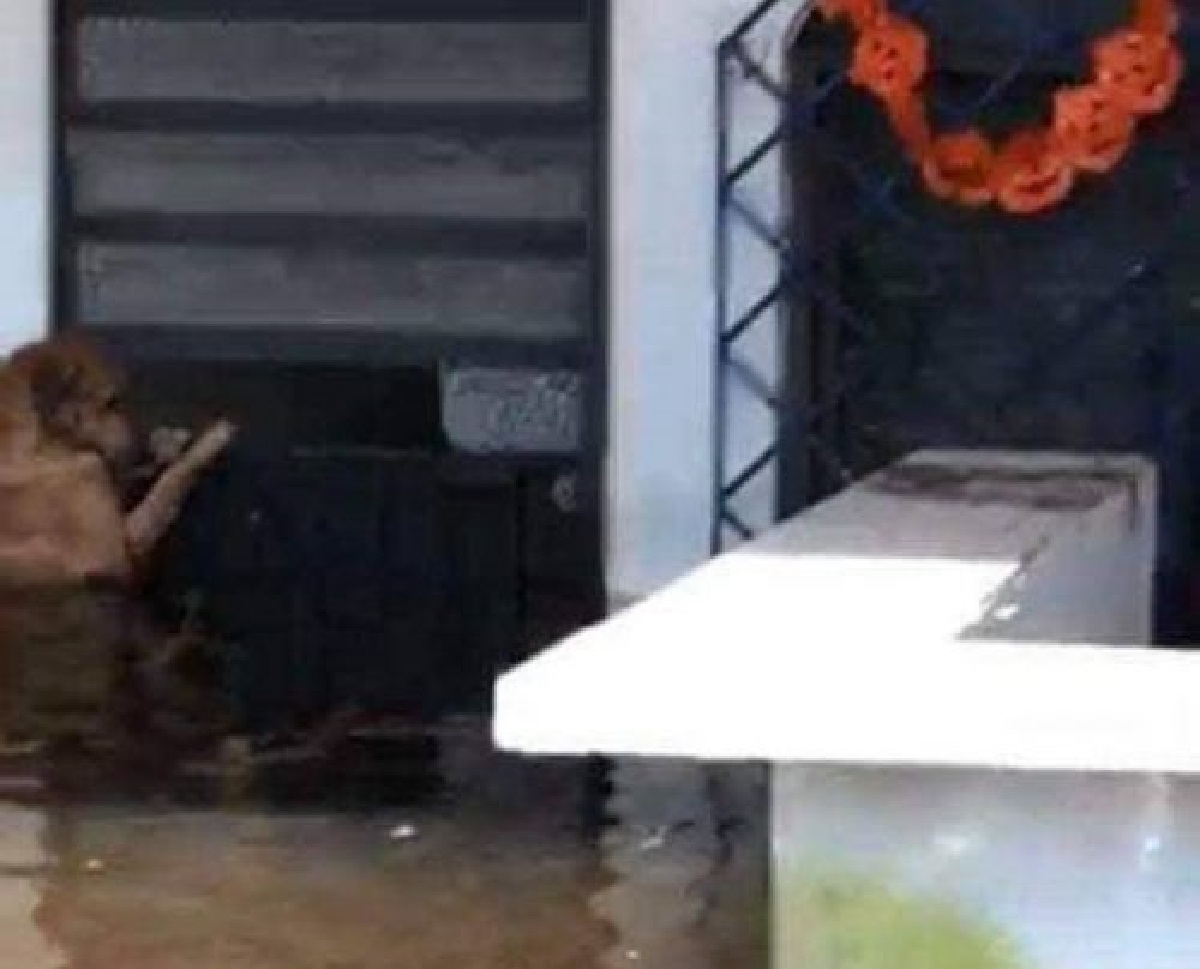 Salvato all'ultimo, il cucciolo di cane continua a tornare a casa per un motivo sconvolgente