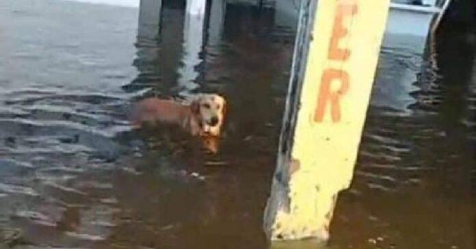 salvato ultimo cucciolo di cane torna casa motivo sconvolgente