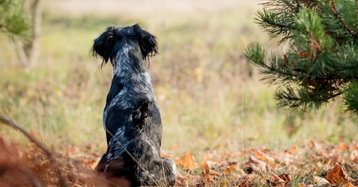 cane di soalle