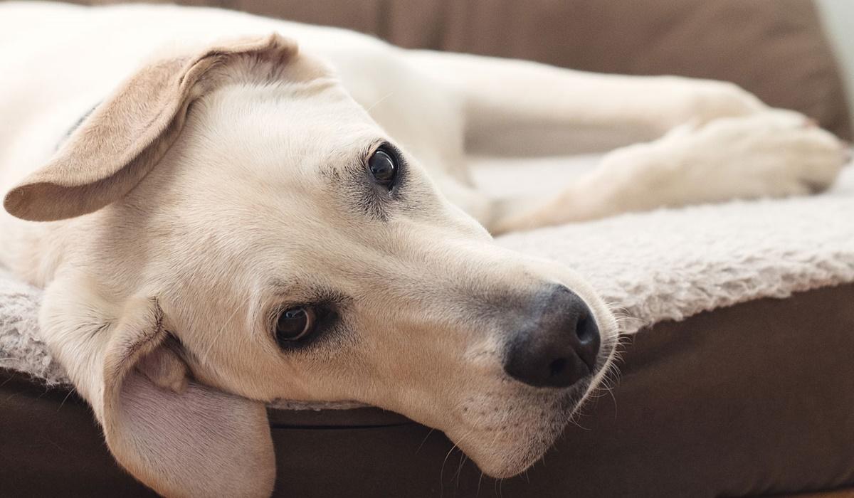 materasso per cani