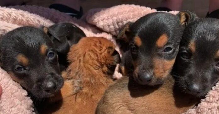 sntì i lamenti di cuccioli cane aprì busta rimase sconvolta