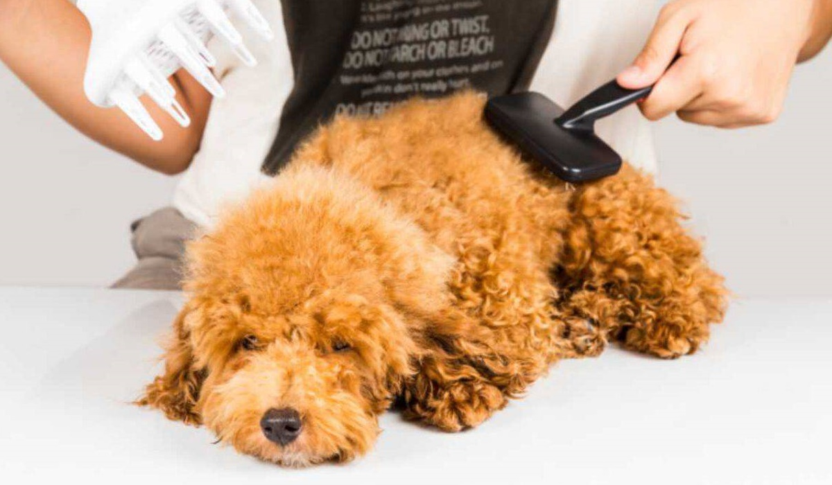 Si può lisciare il pelo del cane? Trucchi e consigli per tenerlo sempre in ordine