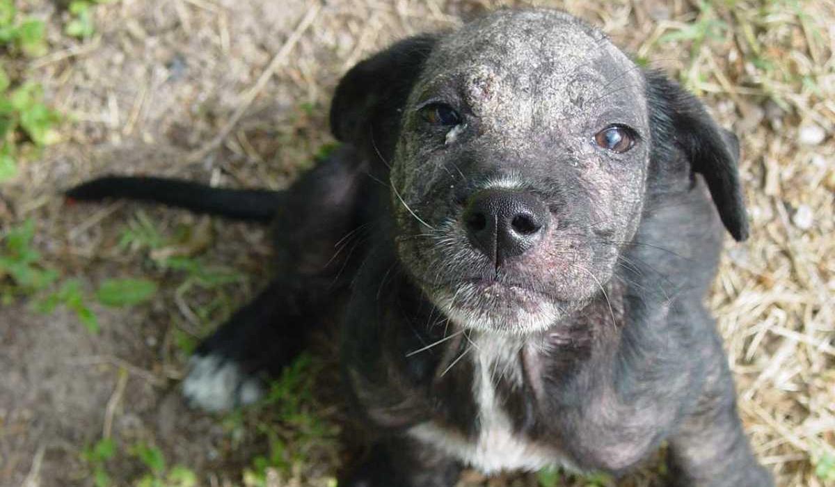 cucciolo di cane con la rogna