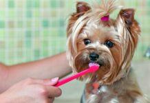 lavare i denti al cane