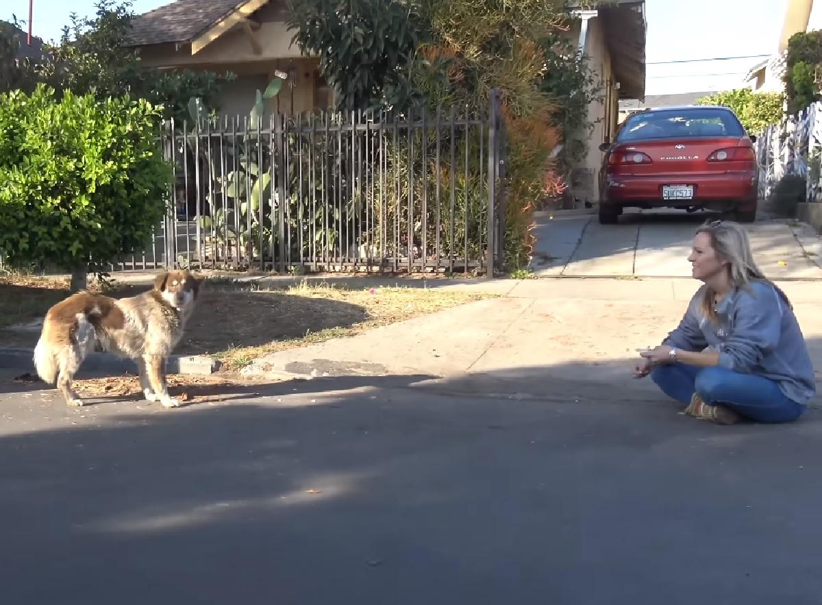 Trovano una cucciola di cane sotto un'auto, nel video tentano di salvarla ma scoprono qualcosa di sconcertante