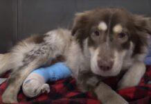 trovano una cucciola di cane sotto auto video tentano salvarla scoprono sconcertante