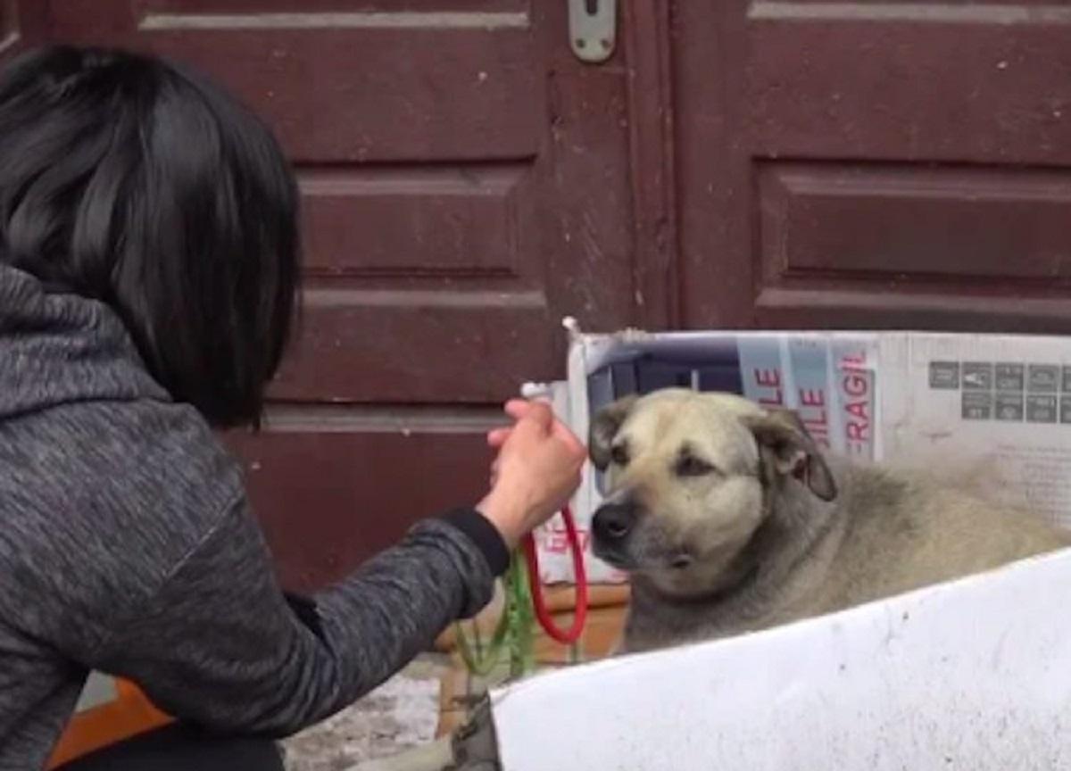 helen cagnolina aiuto
