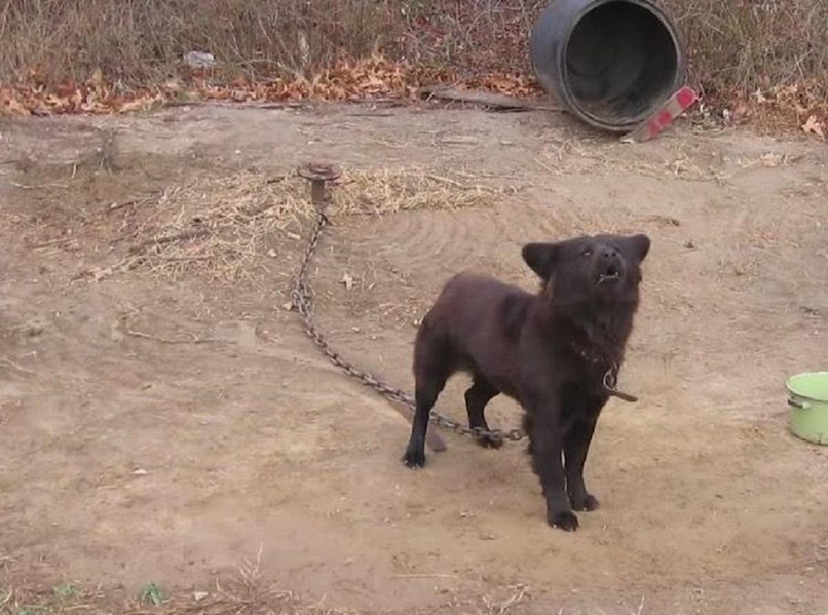 Trovò la cucciola di cane in condizioni assurde, poco poteva fare per salvarla ma poi accadde il miracolo