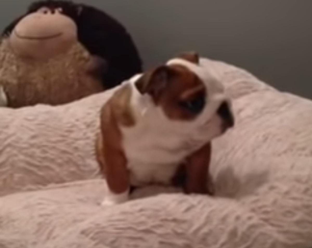 felicità piccolo cucciolo