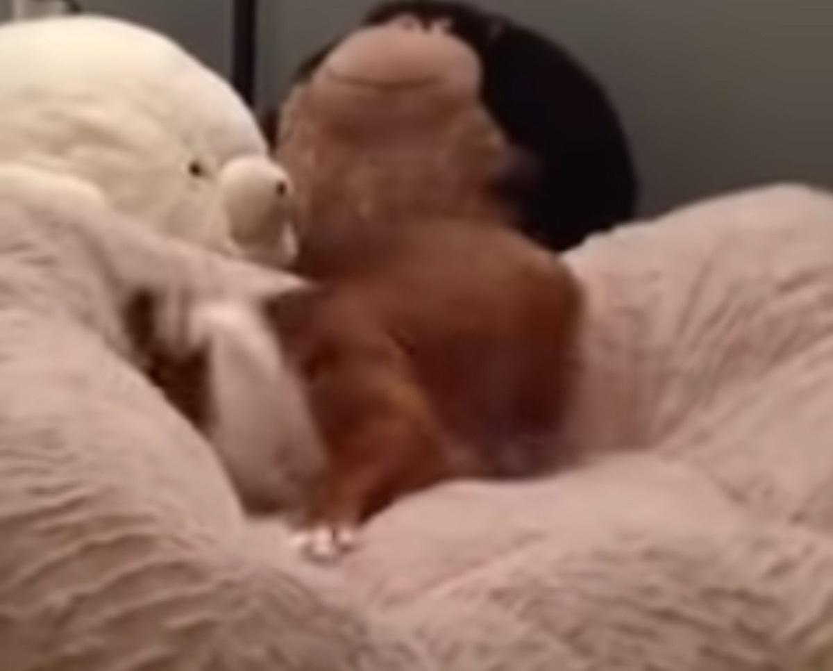 chunky cucciolo felice