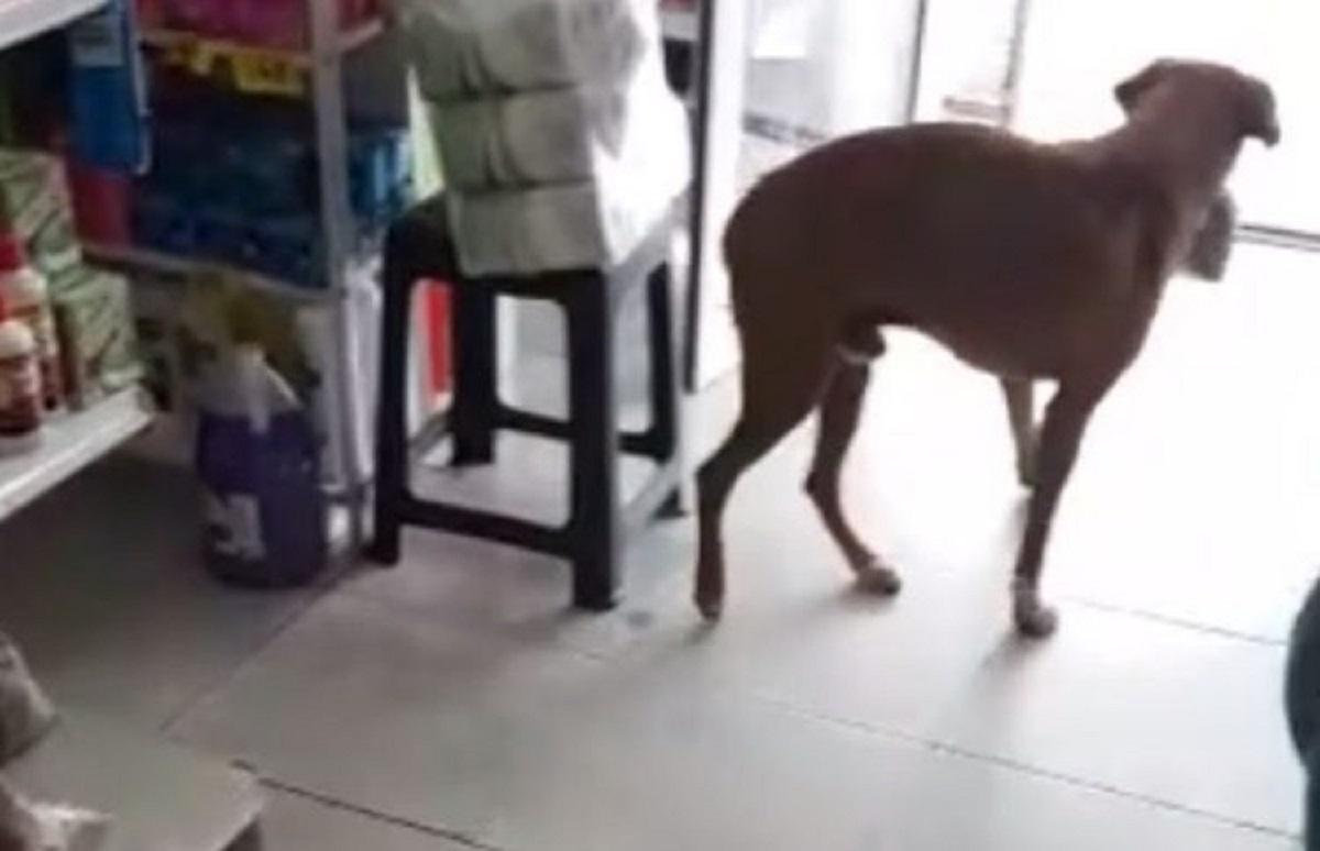 Un cucciolo di cane entra furtivamente nel negozio, il video ci chiarisce le sue intenzioni