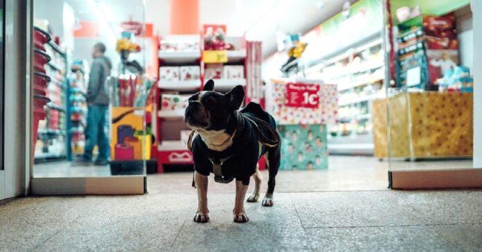 cucciolo entra furtivamente negozio video chiarisce intenzioni