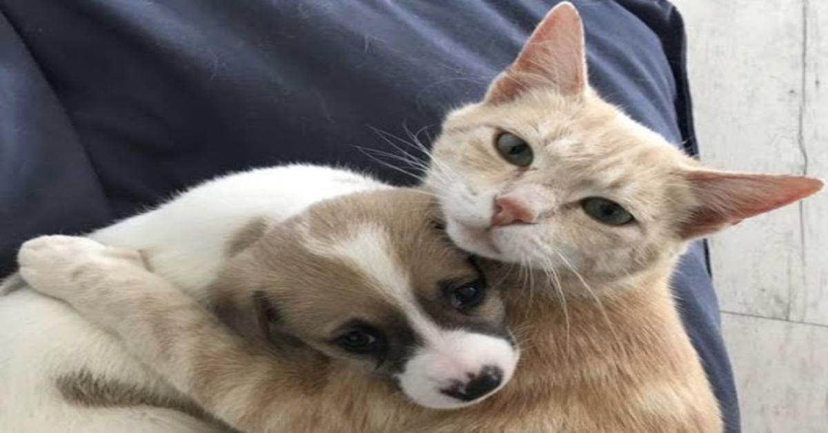 La gattina Kathryn che ha adottato dei cuccioli di cane (VIDEO)