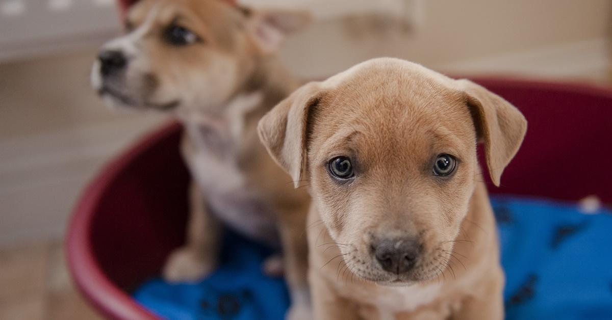 cuccioli di colore marrone