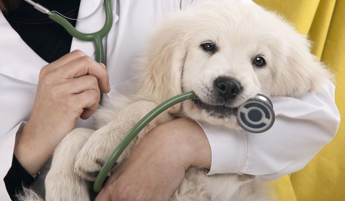 Virbagen Omega per cani: che cos'è, a cosa serve e in quali casi si usa questo farmaco