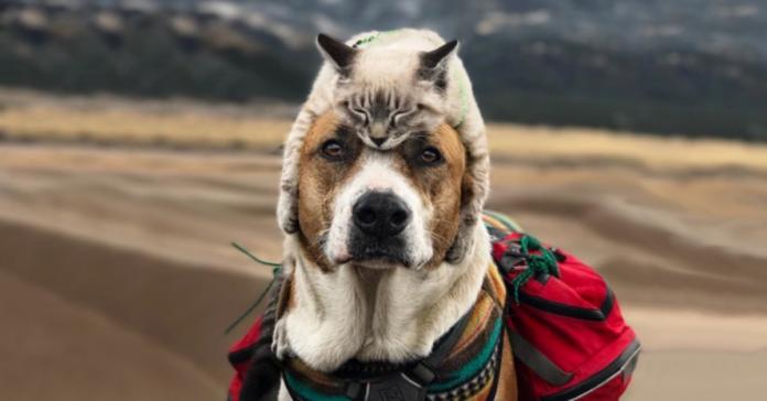 Baloo e Henry in montagna