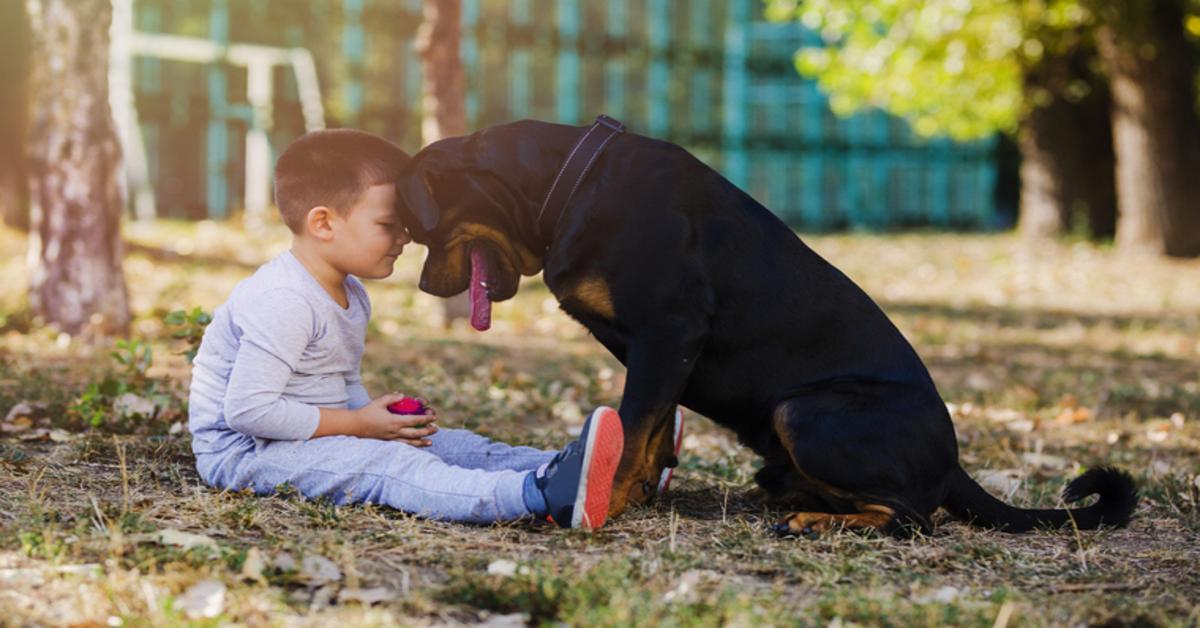 Ecco come capire a chi va il cane se ti separi o divorzi