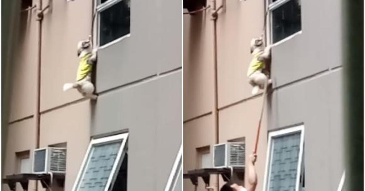 L'incredibile salvataggio di un cucciolo di cane che per cercare il suo padrone resta quasi impiccato a una finestra del terzo piano (VIDEO)