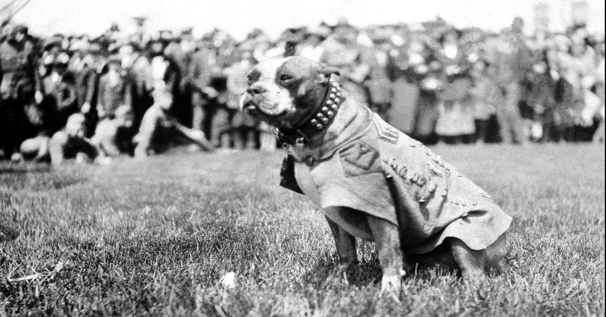 Stubby, il cucciolo di cane eroe durante la Prima Guerra Mondiale ora protagonista di un bellissimo film animato (VIDEO)