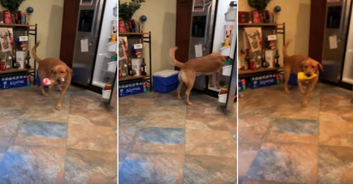 Adorabile cucciolo di cane aiuta il padrone a preparare un sandwich (VIDEO)