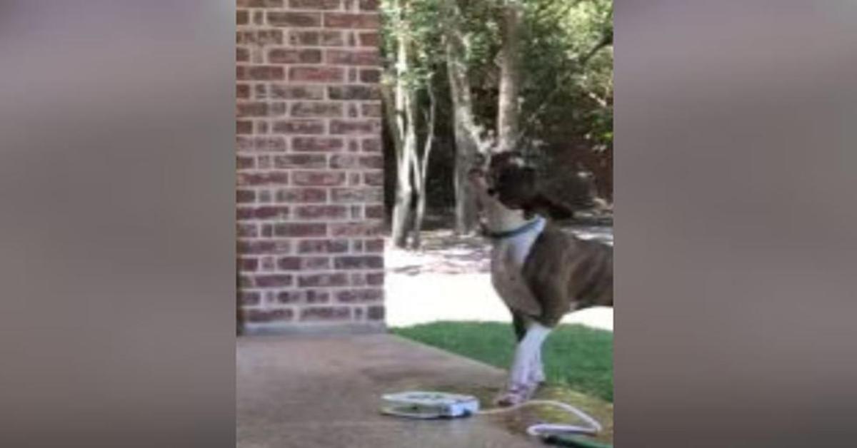 Un adorabile cucciolo di cane applica un incredibile trucco per calmare la sua sete (VIDEO)
