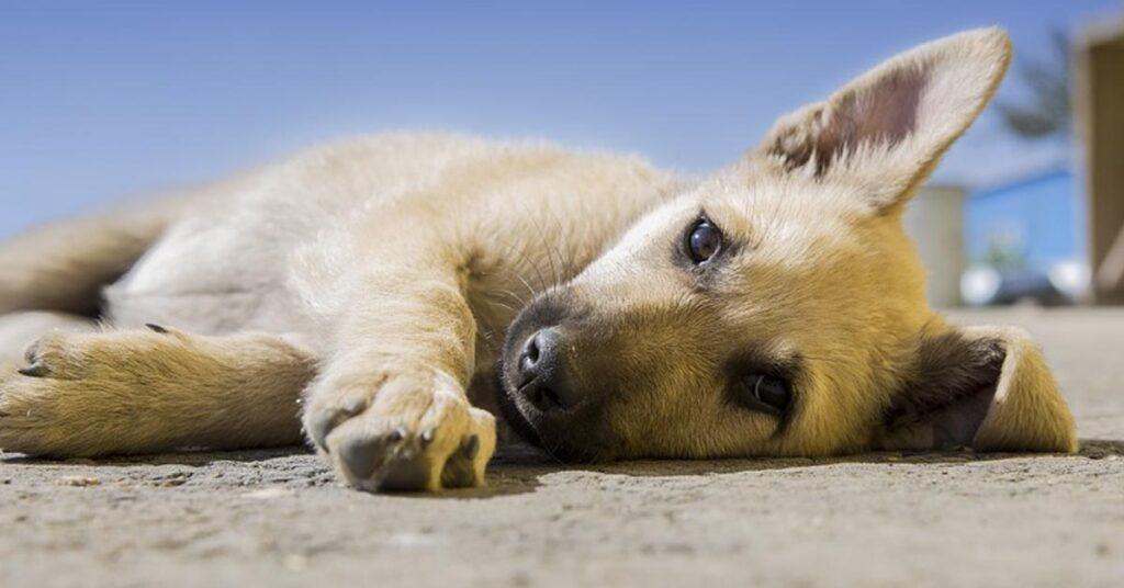 Attenzione a considerare il cane un semplice animale: c'è molto di più in lui