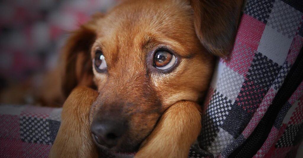 Attenzione ai cani maschi, potrebbero provocarti questi sintomi